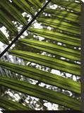 Baku Fern Reproducción de lámina sobre lienzo por Dale MacMillan