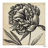 Graphic Floral II Giclee Print by  Vision Studio