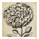 Graphic Floral V Giclee Print by  Vision Studio