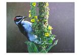 Woodpecker Mullen Affiches par Chris Vest