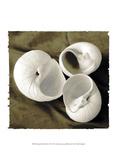 Equalized Shell Trio II Kunst av Andrea James