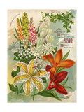Collection of 10 Beautiful Summer Flowering Bulbs and Lillies Poster