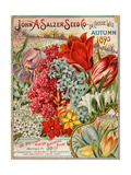 Seed Catalog Captions (2012): John A. Salzer Seed Co. La Crosse, Wisconsin, Autumn 1895 ポスター