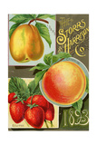 Seed Catalogues: Storrs and Harrison, Co. Painesville, OH, 1893 Juliste