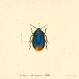 Cimex Oleraceus Kunst af A. Poiteau