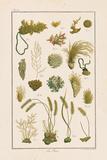 Sea Plants I Posters por Maria Mendez