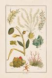 Sea Plants II Pôsters por Maria Mendez