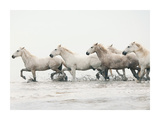 White Horses II Prints by Irene Suchocki