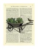 Wheelbarrow Lettuce & Bird Giclee Print by Marion Mcconaghie
