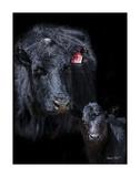 Black Angus Giclee Print by Barry Hart