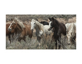 Pasture Pals (color) Giclee Print by Barry Hart