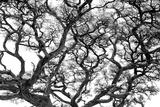 Tree Vine Fotografisk tryk af Howard Ruby