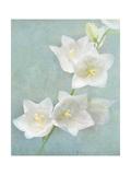 Aqua Floral IV Prints by Amy Melious