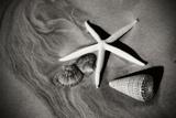 Tracks of the Tide II Fotografie-Druck von Alan Hausenflock