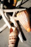 Shells by the Sea I Fotografie-Druck von Alan Hausenflock