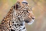 Leopard Fotografisk tryk af Howard Ruby