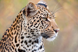 Leopard Photographic Print by Howard Ruby