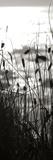 Coastal Grass Panel II Reproduction photographique par Erin Berzel