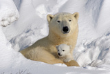 Protective Mother and Cub Fotografie-Druck von Howard Ruby