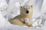 Protective Mother and Cub Lámina fotográfica por Howard Ruby