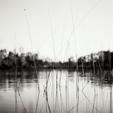 Water Grass Photographic Print by Bob Stefko