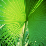 Palm Frond II Photographic Print by Bob Stefko