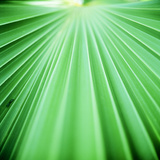 Palm Frond III Photographic Print by Bob Stefko