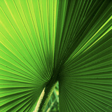 Palm Frond I Photographic Print by Bob Stefko