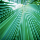 Palm Frond IV Photographic Print by Bob Stefko