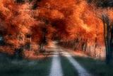 Autumn Lane Impressão fotográfica por C. McNemar
