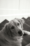 Goldie I Black and White Photographic Print by Karyn Millet