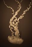 Sea Nettle IV Reproduction photographique par Erin Berzel