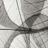 Leaf Designs III BW Photographic Print by Jim Christensen