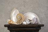 Seashell Still Life I Photographic Print by C. McNemar