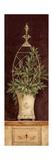 Olivenzweige II (Kleinformat) Giclée-Premiumdruck von Pamela Gladding