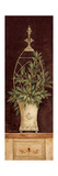 Olive Topiary II Premium Giclee Print by Pamela Gladding
