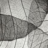 Leaf Designs IV BW Fotografisk tryk af Jim Christensen