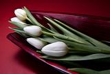 Tulips II Impressão fotográfica por C. McNemar