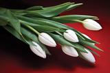 Tulips I Impressão fotográfica por C. McNemar