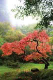 Japanese Gardens IV Photographic Print by Brian Moore