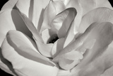 Macro Flower I Photographic Print by Brian Moore