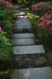 Garden Stairs I Photographic Print by Brian Moore