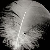 Feather III Fotografisk tryk af Jim Christensen