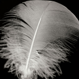 Feather III Photographic Print by Jim Christensen