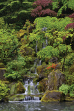 Japanese Gardens I Photographic Print by Brian Moore