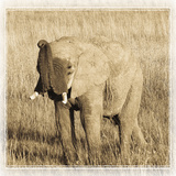 Young Africa Elephant Reproduction photographique par Susann Parker