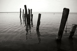 Pilings I BW Photographic Print by Alan Hausenflock
