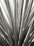 Torrey Yucca Photographic Print by Bob Stefko