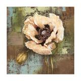 Papaver I Poppy Flower Premium Giclee Print by Selina Werbelow