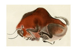 Prehistoric Cave Painting of a Charging Buffalo, Altamira, Spain Giclee Print